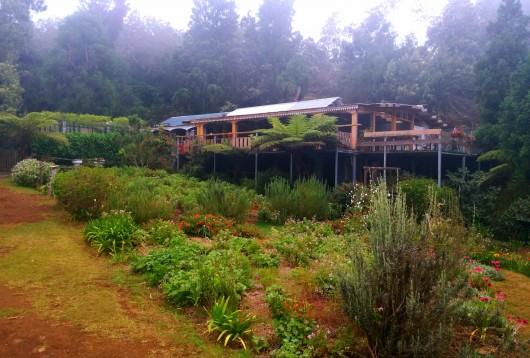 Vue du jardin créole sur la maison du géranium