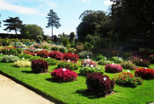 Le jardin des Plantes et ses collections botaniques