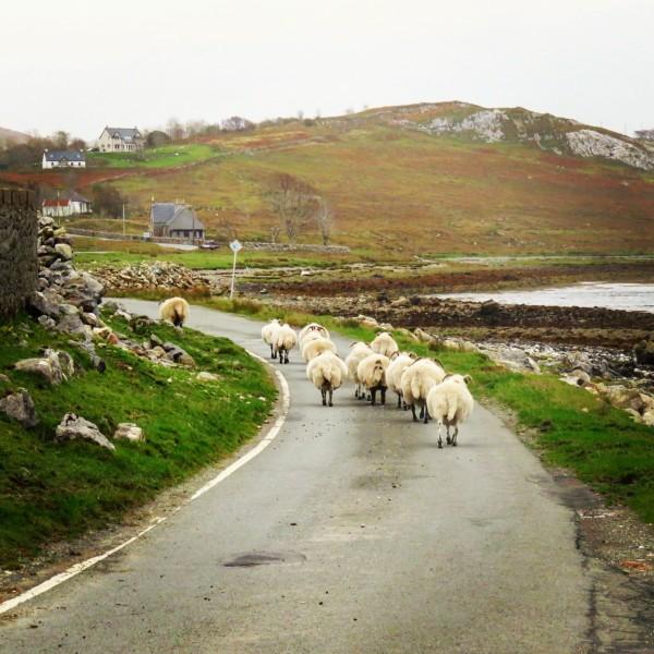 Et les fameux moutons ;)